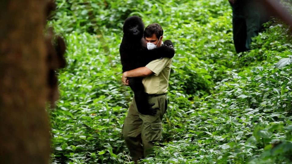 Emmanuel De Merode with a gorilla