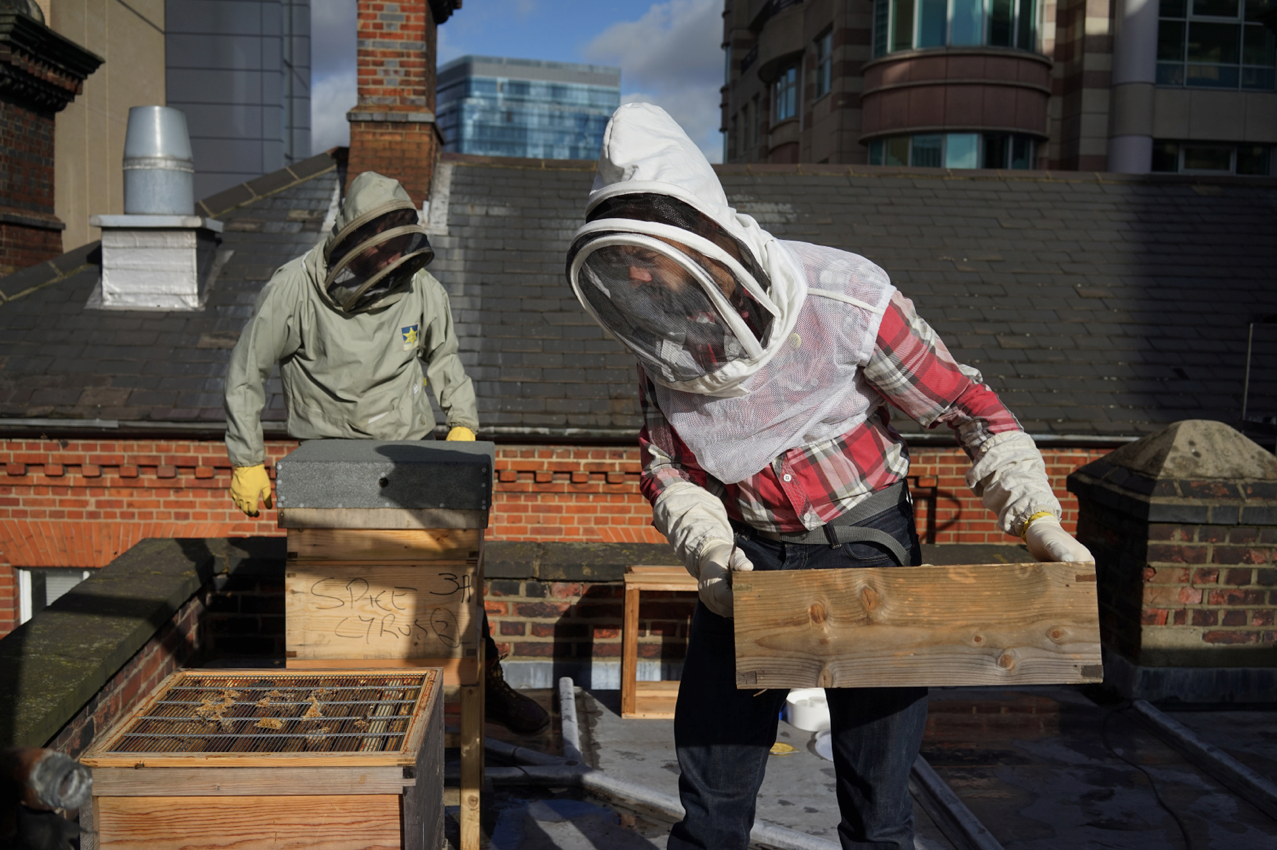 london-beekeepers-2