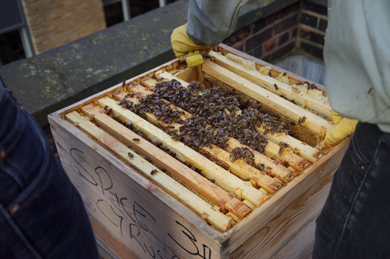 london-beekeepers-3