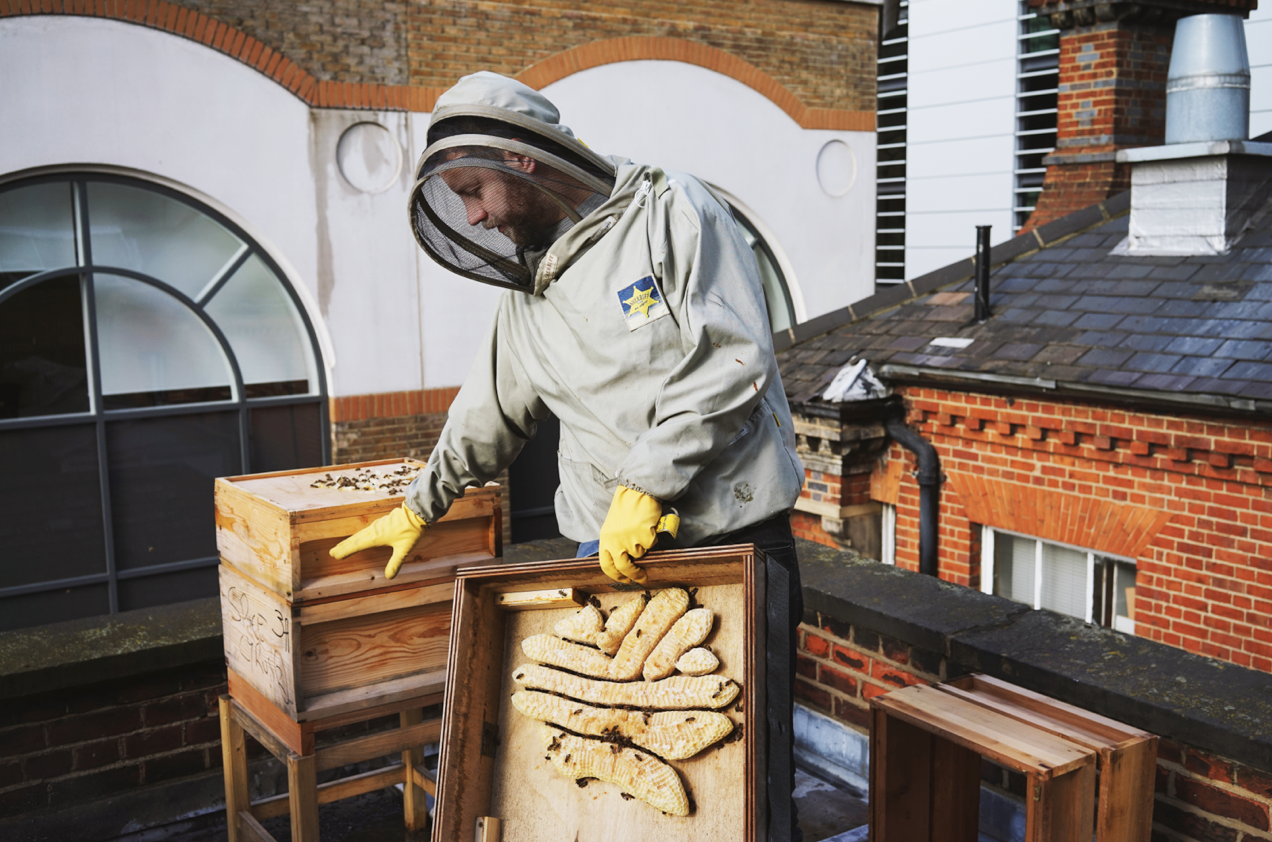 london-beekeepers-7