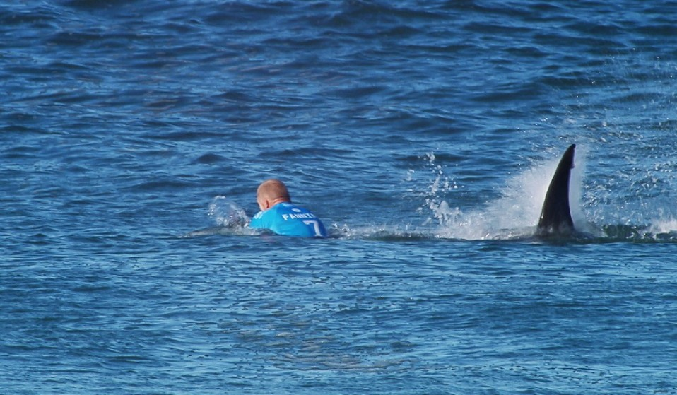 Shark Attacks Mick Fanning During A Surf Comp But Do We