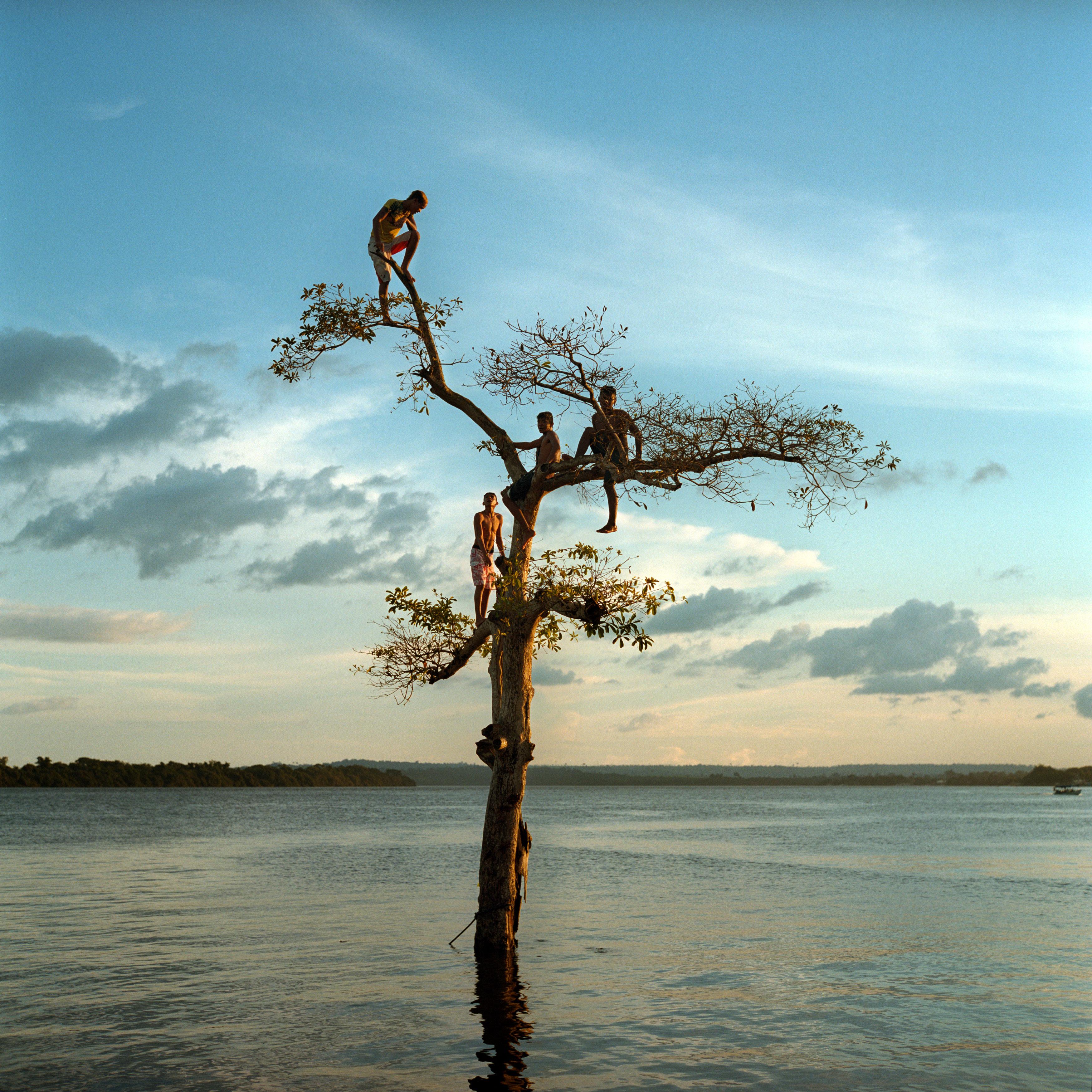AVE_tree