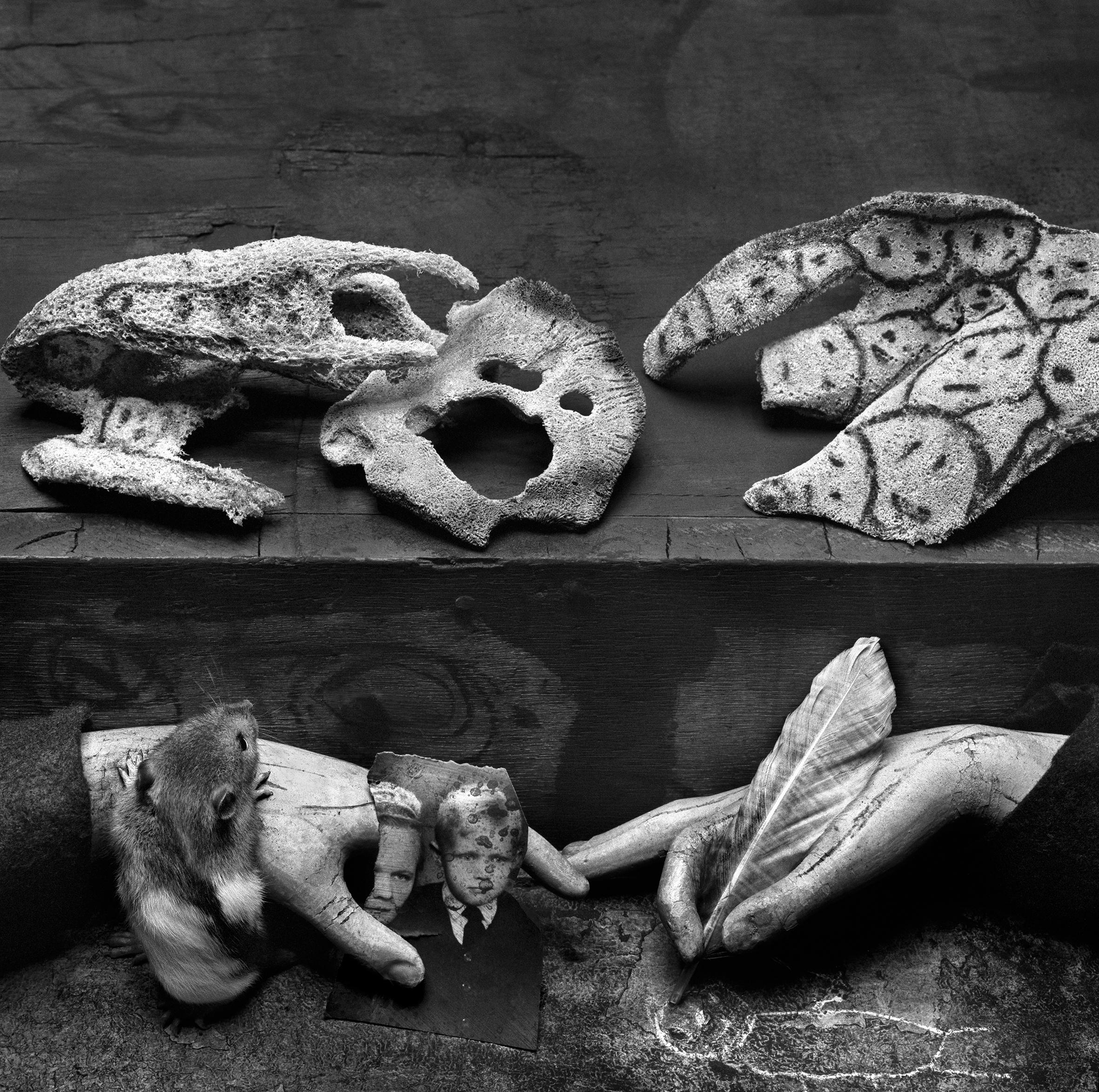 Complex Ambiguity, 2009, courtesy Roger Ballen