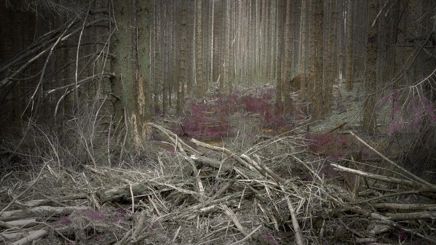 mattbotwoodlarge