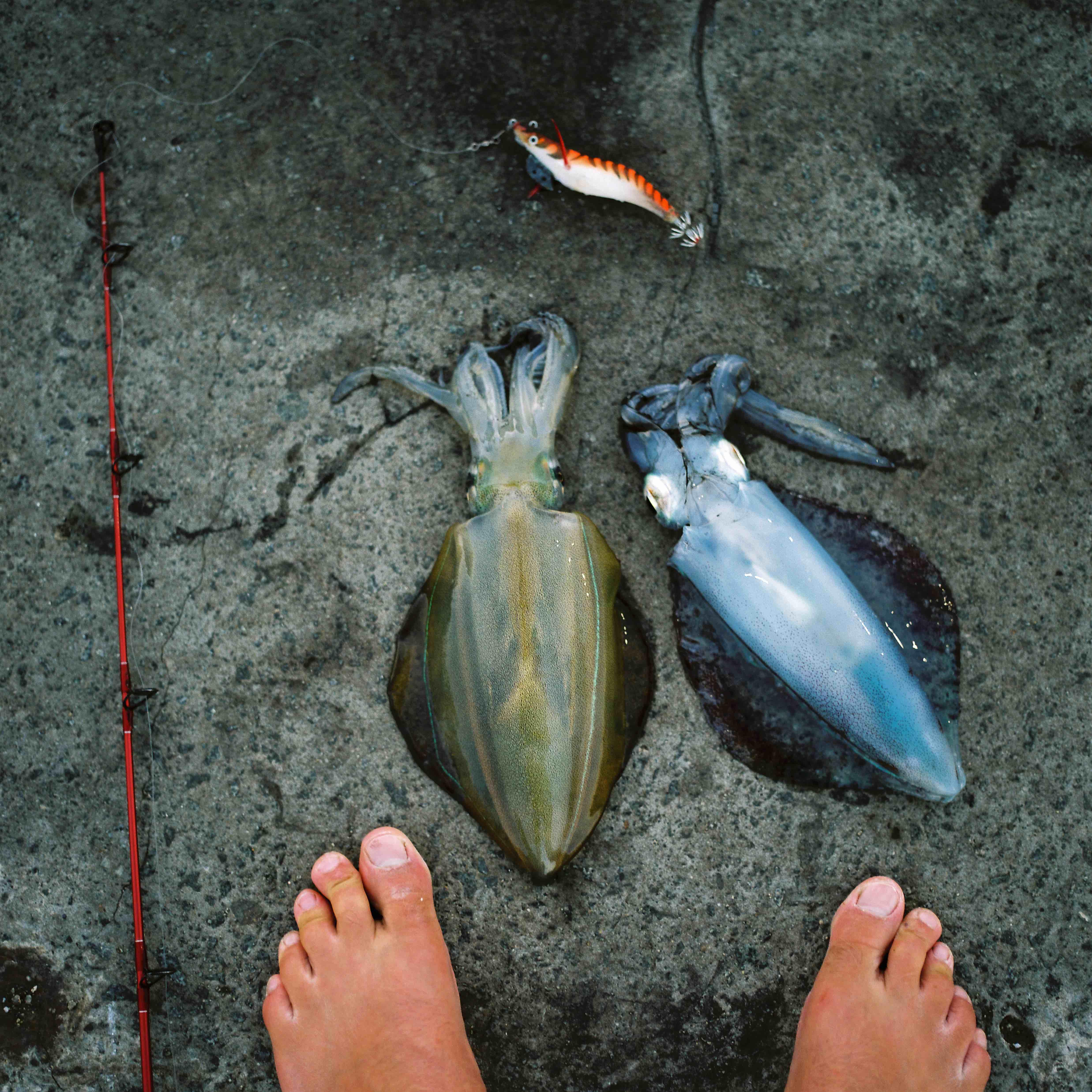Calamari-Tas_JBowden_Huck_HD