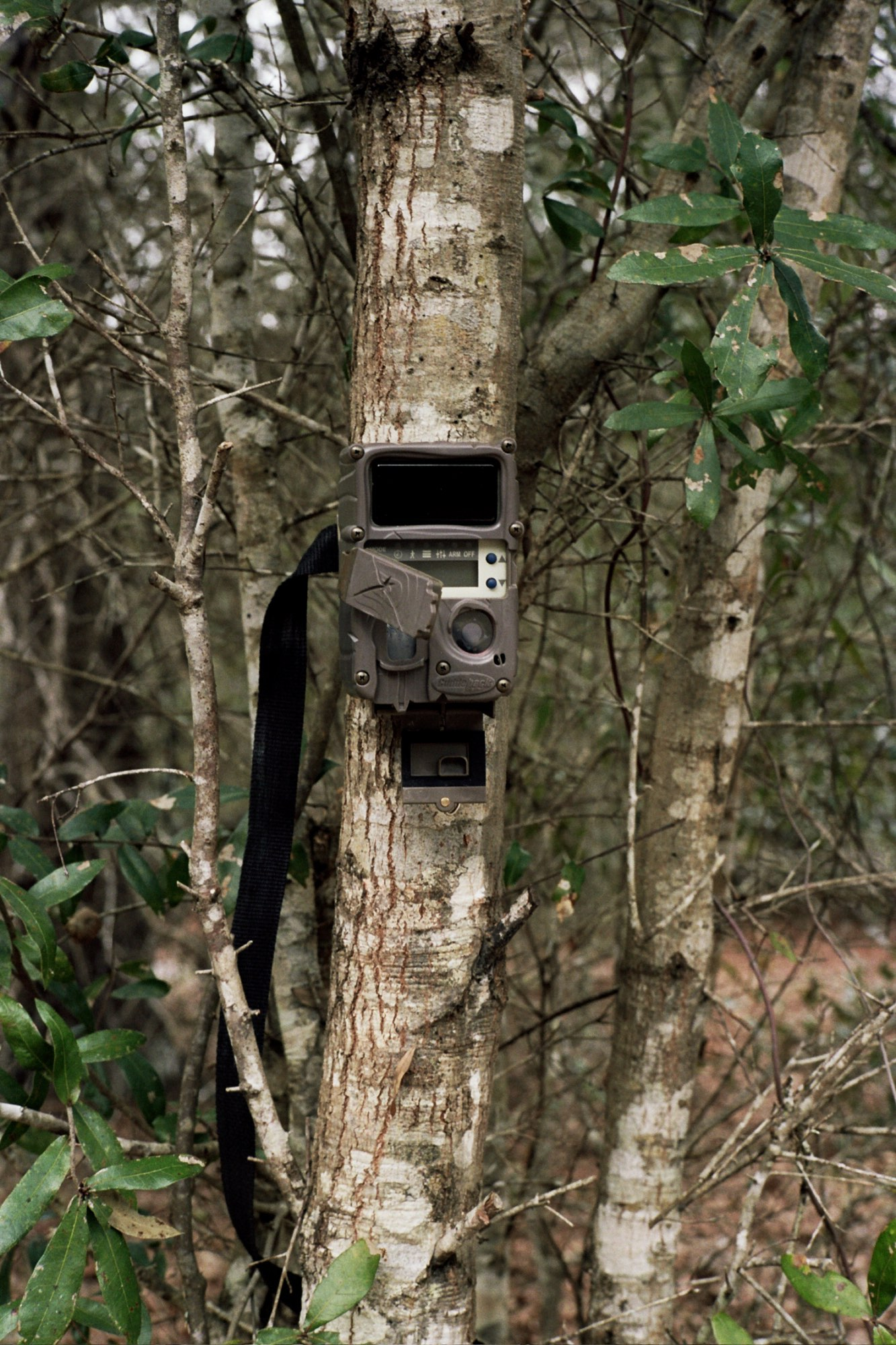 Trail Camera, Little Orange Creek Nature Preserve, Hawthorne, Florida, 2016