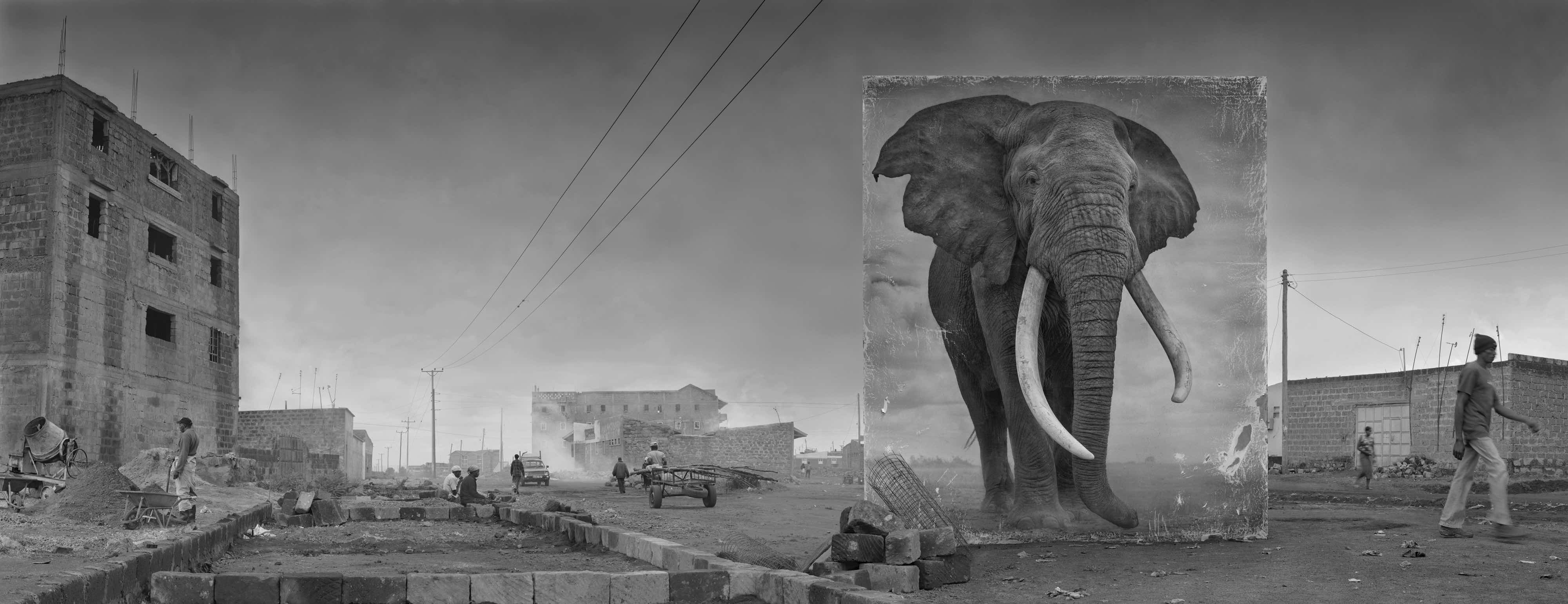 'Road With Elephant'