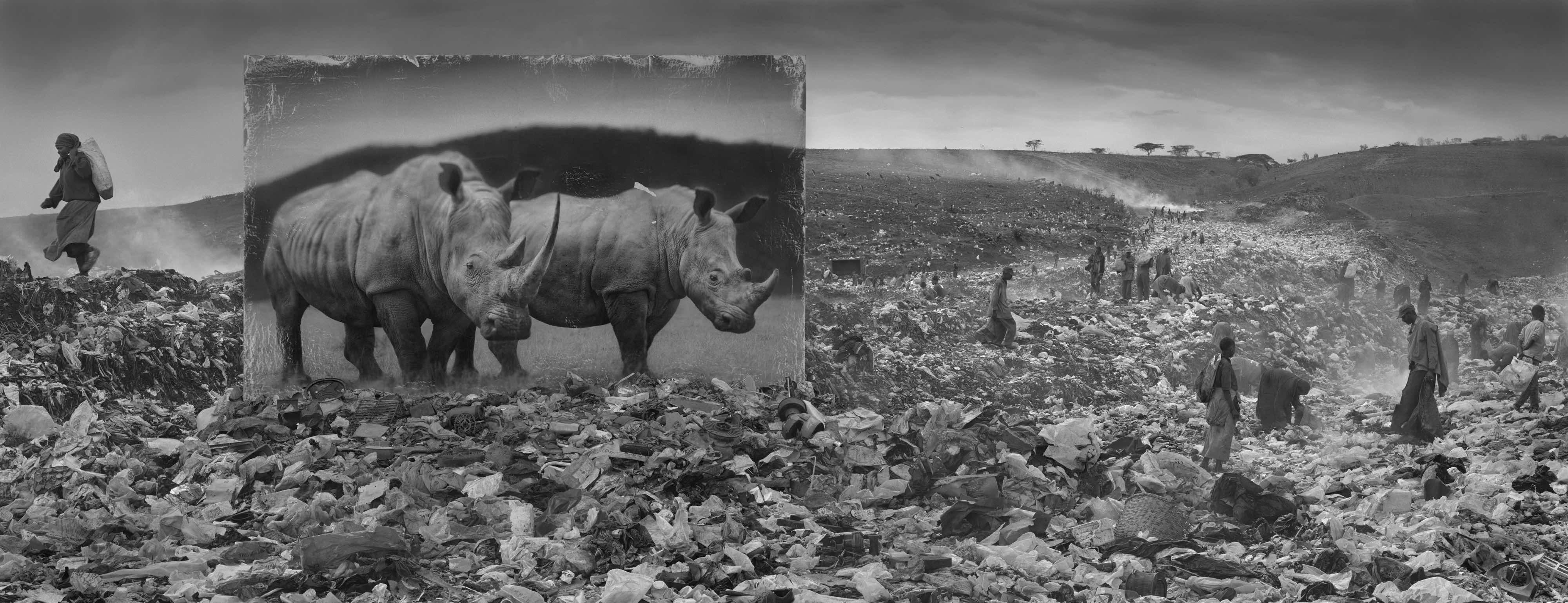 'Wasteland With Rhinos'