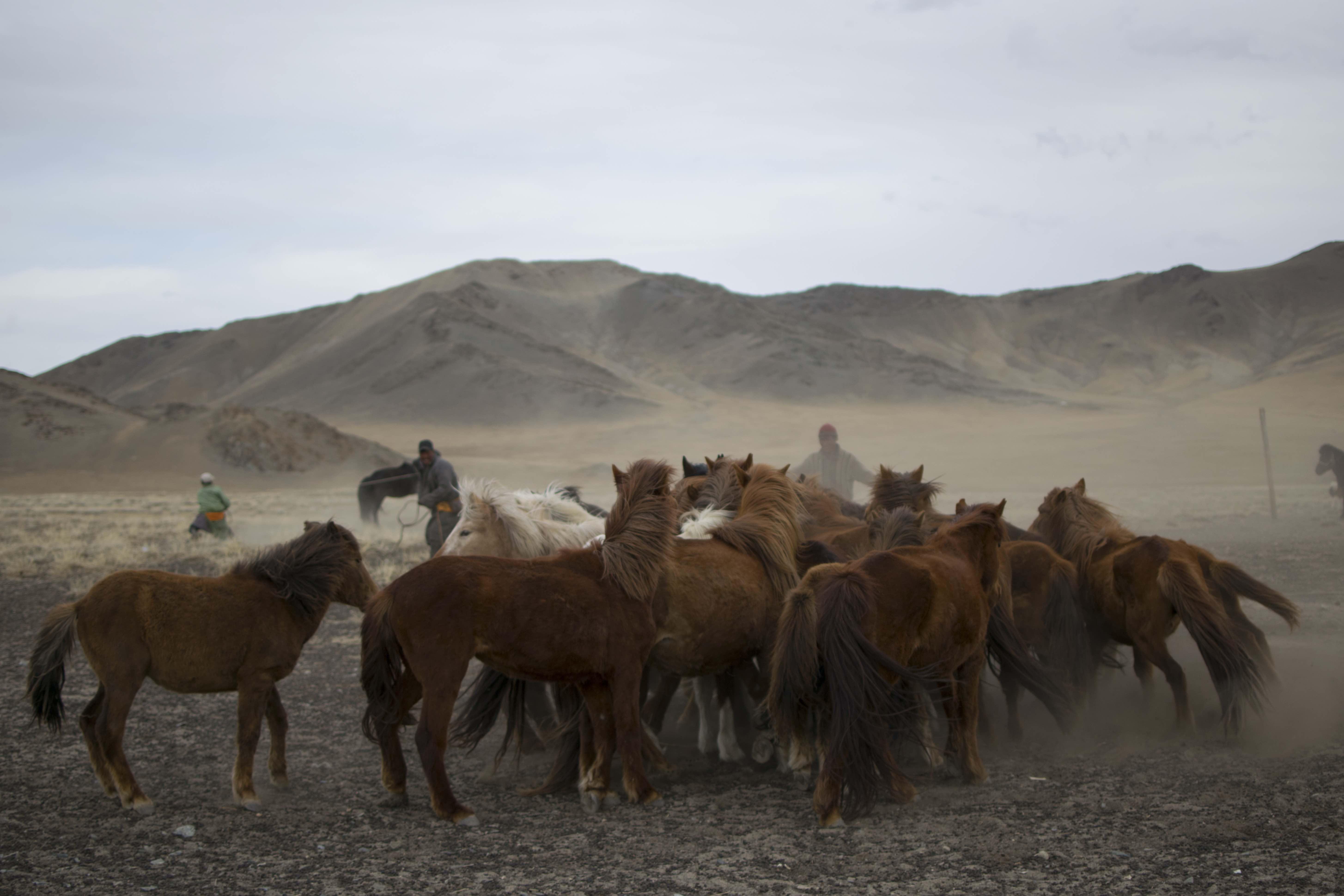 01 Herd