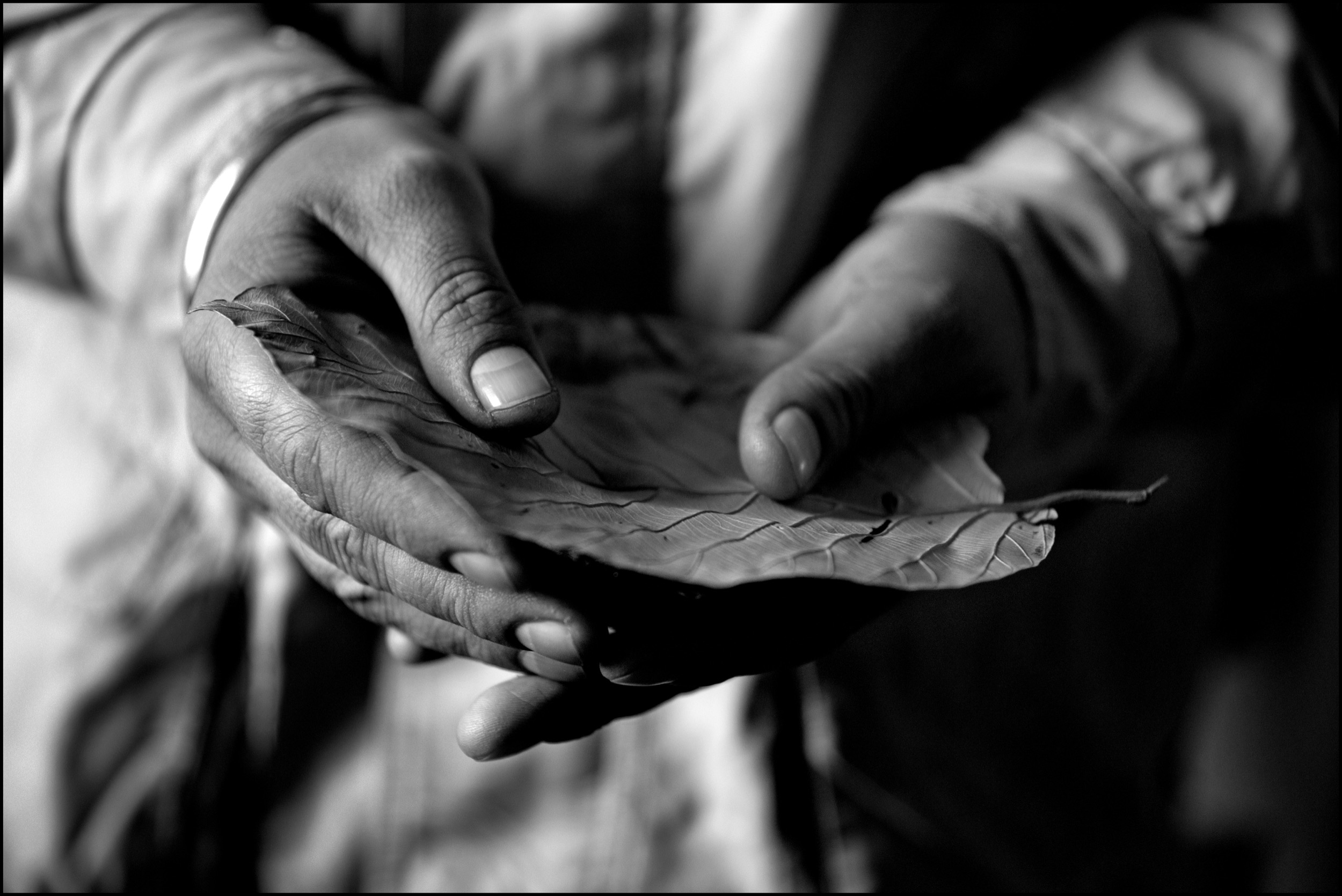 In the Golden Temple, the Sikhs' most sacred place, a pilgrim holds a leaf to receive the morning darshan (food offering); Amritsar, India.