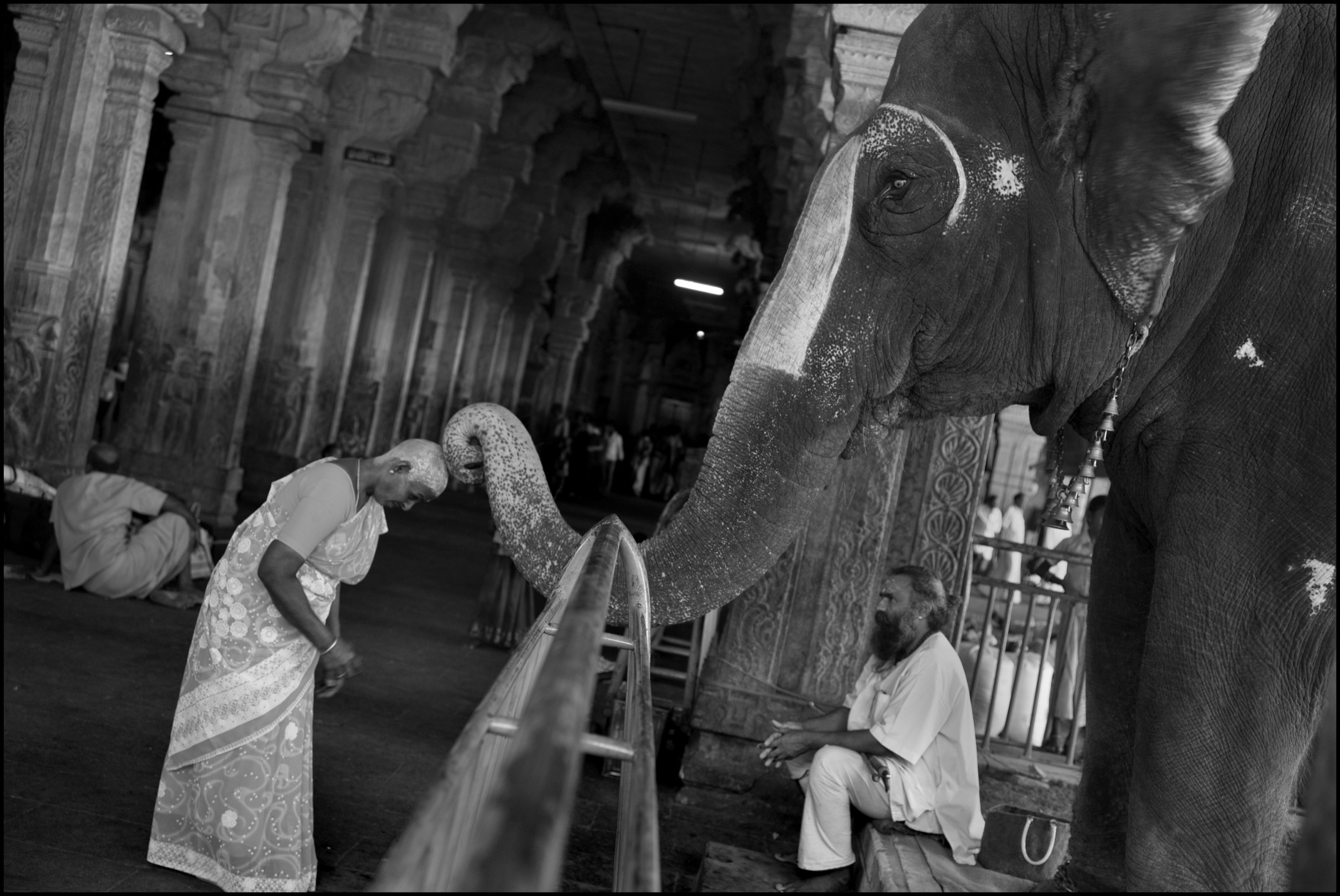 At the Sri Ranganathaswamy temple, an elephant blesses a pilgrim with its trunk after receiving a cash donation. The pilgrim has offered her hair to a resident deity, and her shaved head is covered with tumeric paste for protection; Tiruchirapalli (Trichy), India.
