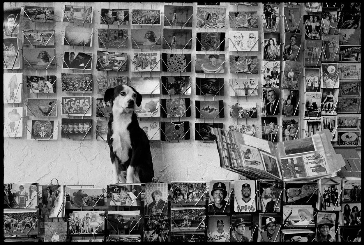 130_MBM_Hobo Postcard Dog_(c) 1999 John Loengard