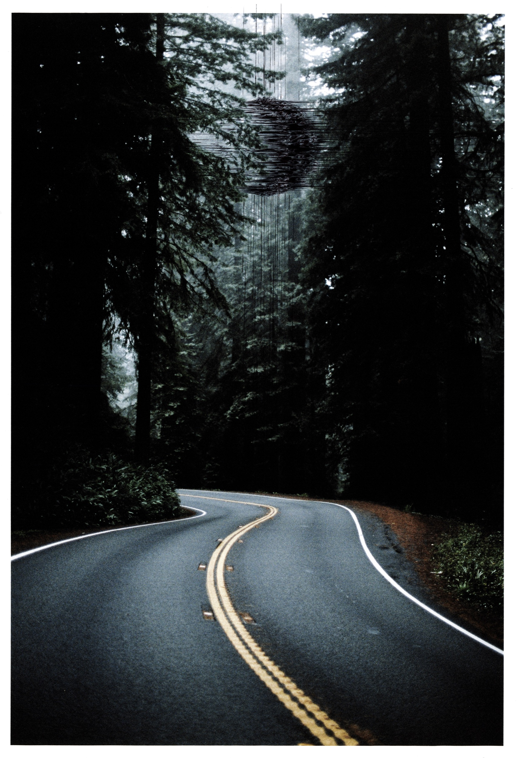 FOREST-ROAD-low