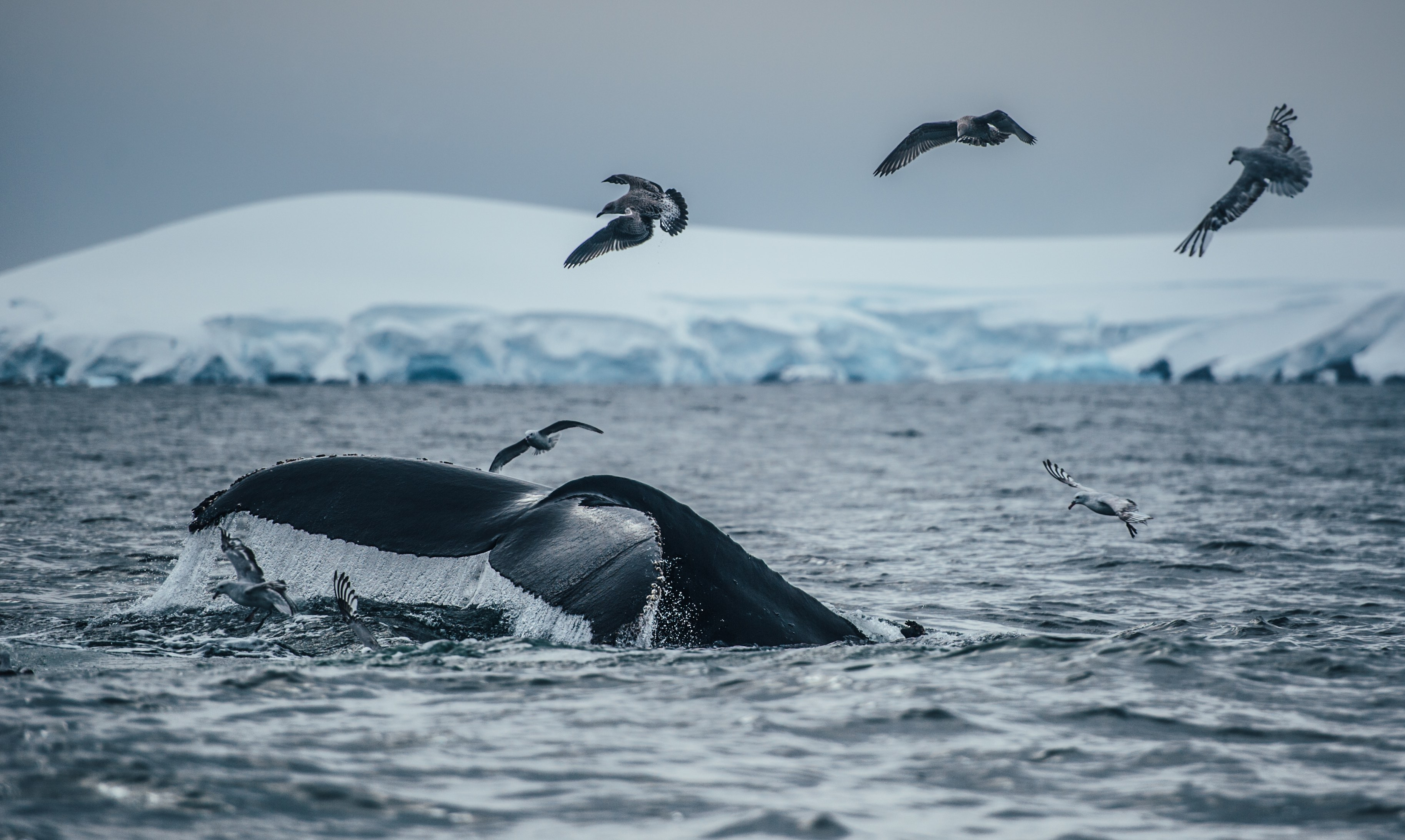 KT_150310_5Swims_AntarcticPeninsula_7014