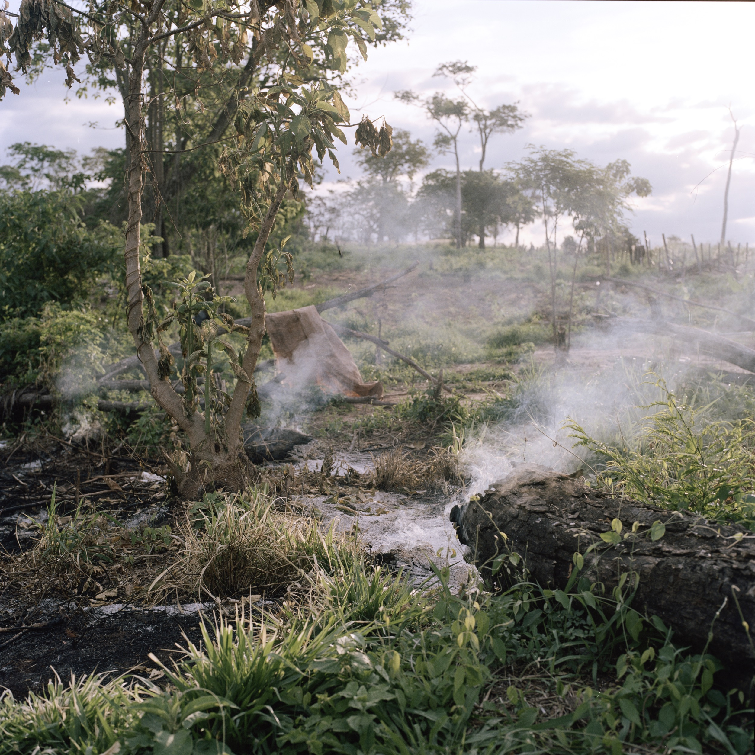 Burned traces of Guayaqui Cuá community after its eviction two days before.