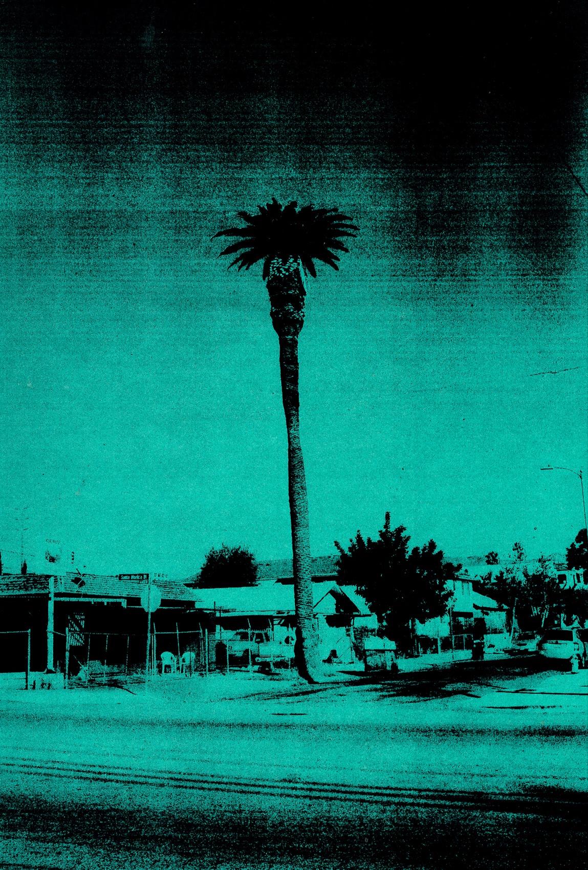 PALM_LA_GREEN_1