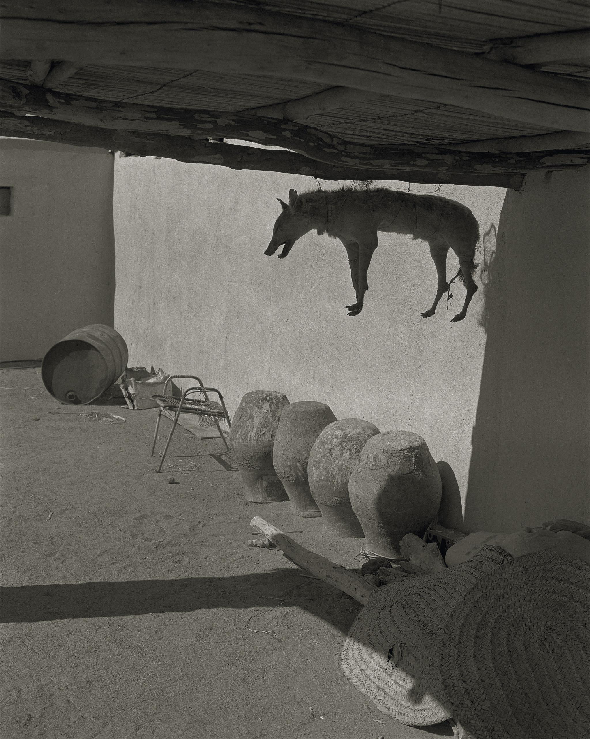 Claude Iverné, Naturalised dog, Toshka, Dar Sukkott, Nubia, Feb. 2002. Pas-de-Calais, 2016