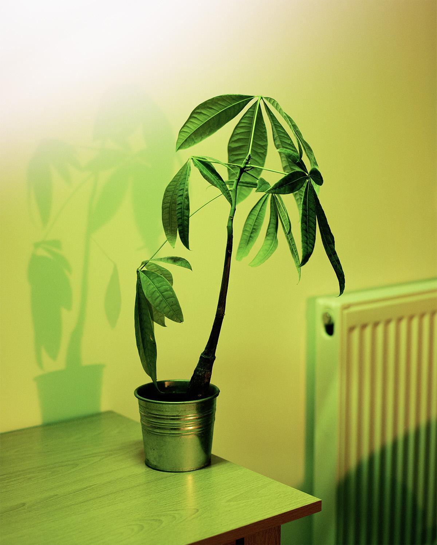 plant 001