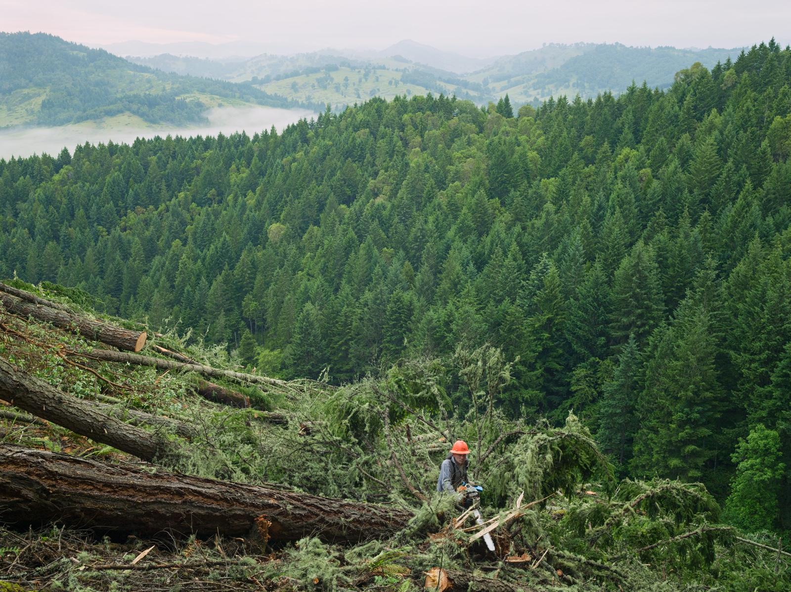 Joel clearcutting a forest planted 60 years earlier, Oregon. © Lucas Foglia, courtesy of Michael Hoppen Gallery, London.