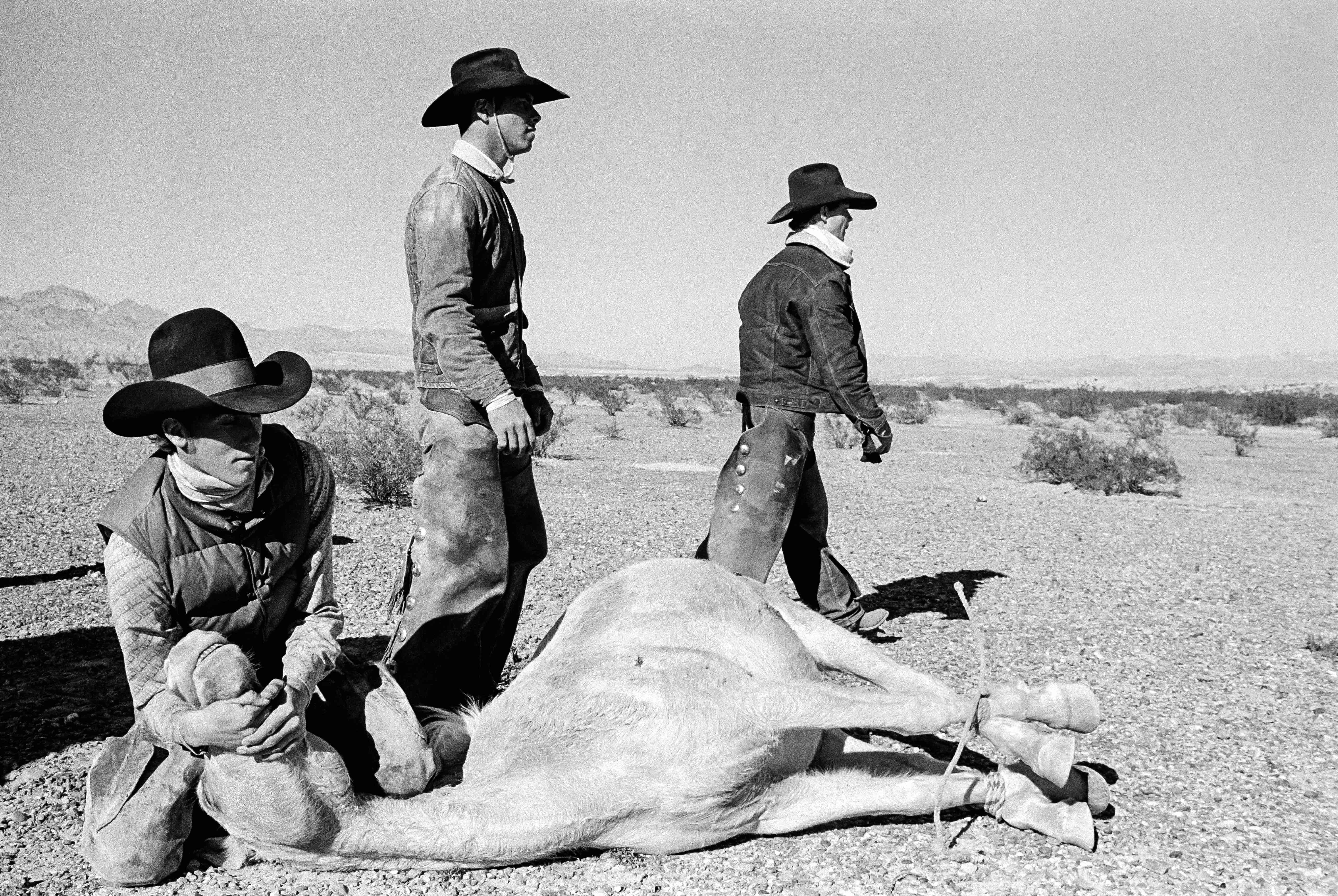 The round-up of the last wild horses in the desert of Arizona. 1980.