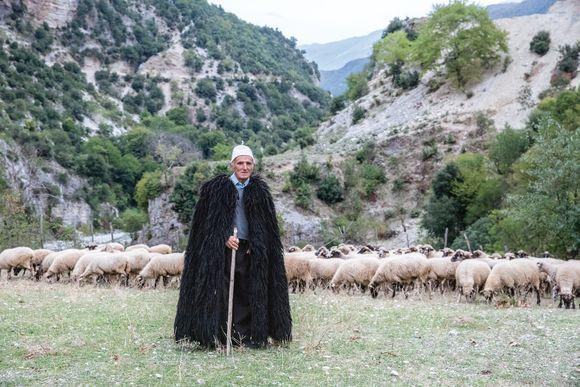 A shepherd guards his flock near the Bënçë River in Albania.