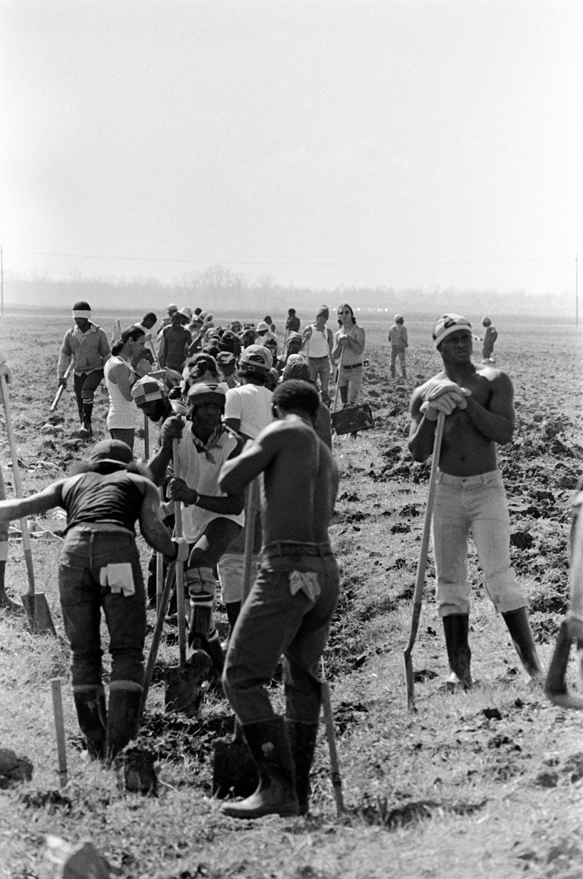 Keith Calhoun. FIELD WORK, ANGOLA STATE PENITENTIARY, 1980.