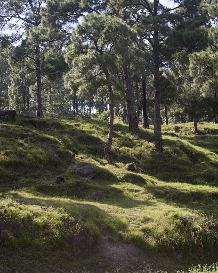 Forest in Suwana, Kashmir © Mahtab Hussain
