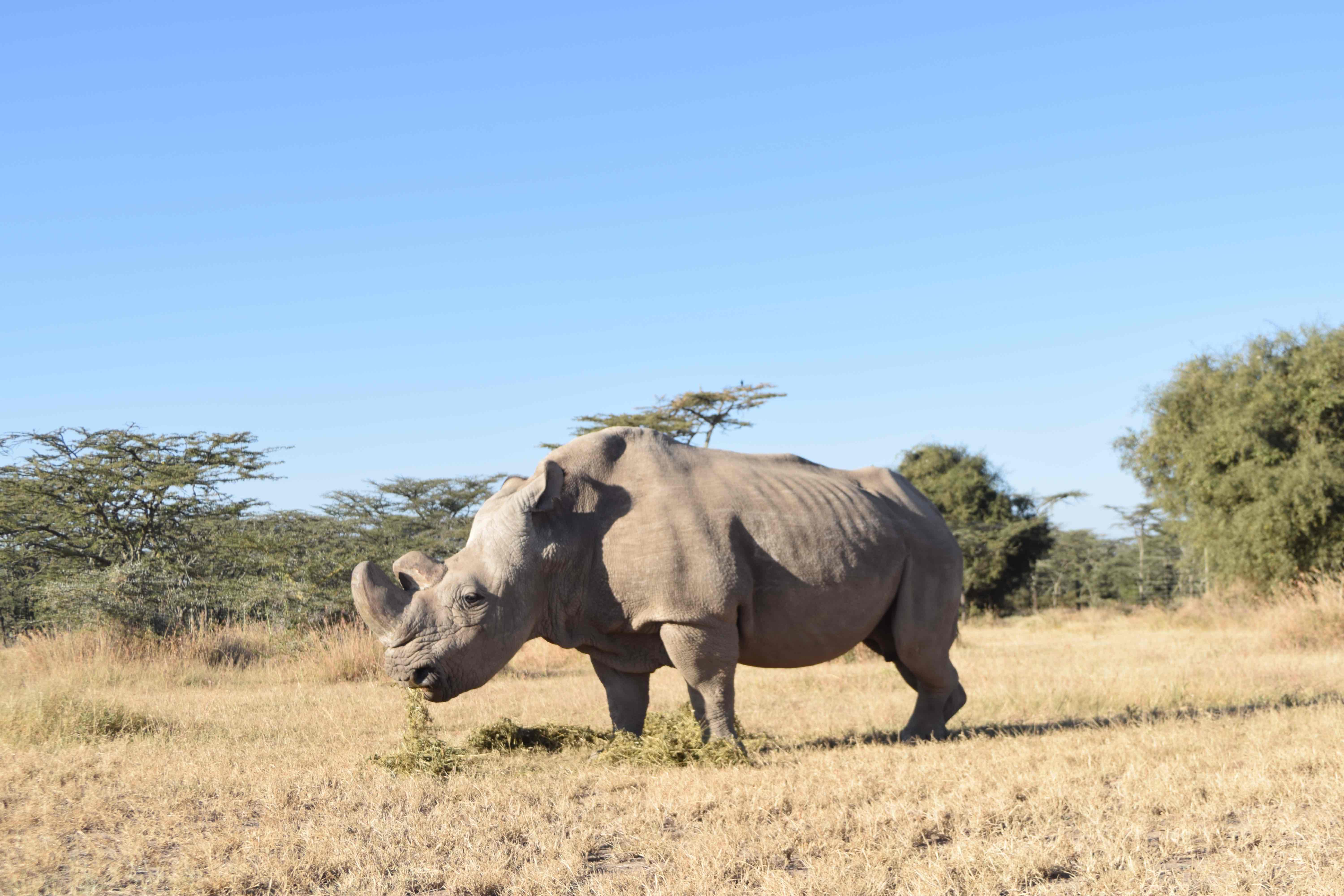The man working to save rhinos from extinction