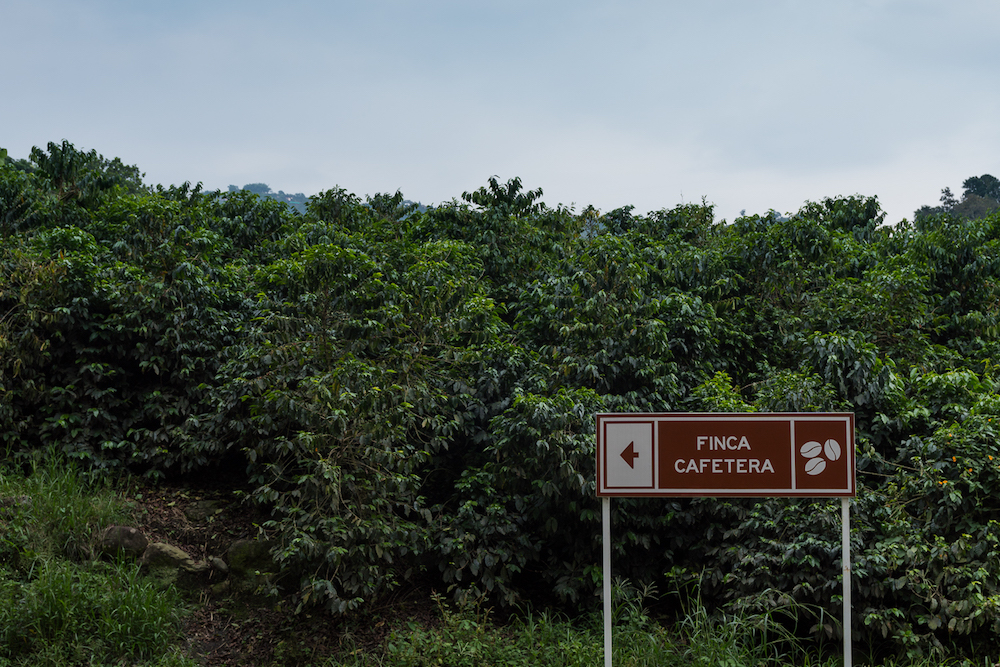 Coffee bushes and a coffee house sign at Hacienda Venecia