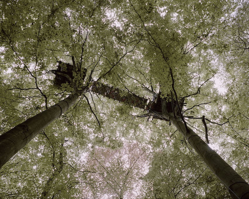 A worm's eye view of a treehouse high in the trees of the forest